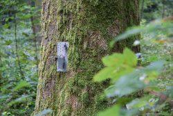 stoneroses3-250x167 Untitled, stoneroses #5